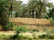 Driving up and down the Wadi Hanifah road you'll be surrounded by date trees which sprout up from behind farm walls
