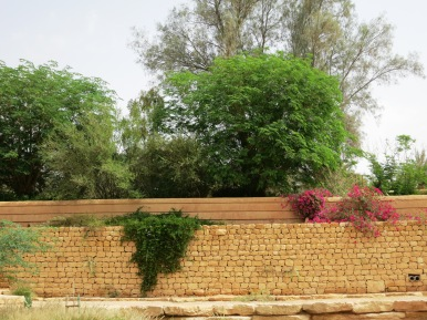 Wadi Hanifah's fauna is diverse and you may be surprised by the type of trees and other fauna you will find in the valley