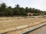 Just maybe the best place to walk in Riyadh
