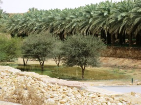 As with any Wadi, Wadi Hanifah can be waterlogged after a flash rain