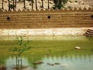 Wadi Hanifa in flood