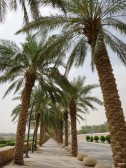 The walkway along Al Elb Dam is a family favourite in Diriyah and should not be missed